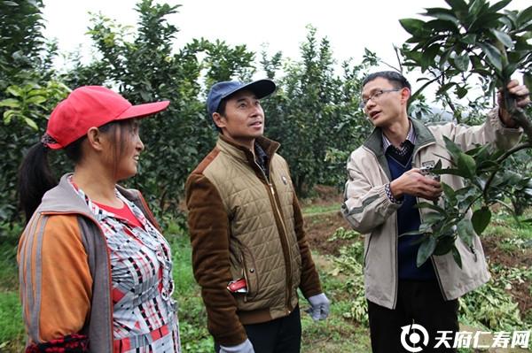 柚子树冬季管理技术