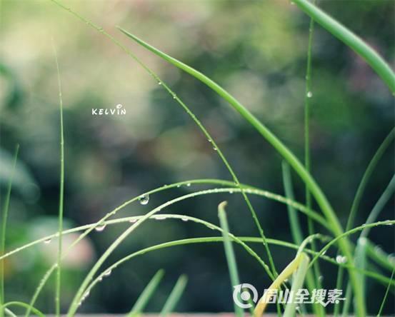 清新绿色四叶草高清图片素材下载三叶草叶子嫩叶绿色叶子幸运草 鲜艳图片