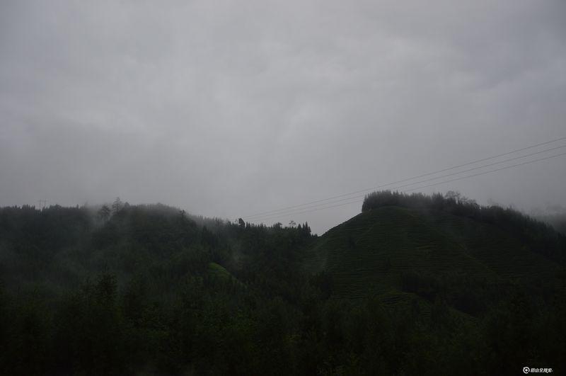 [旅游] 烟雾缭绕的茶山 来自仙境洪雅瓦屋山复兴村