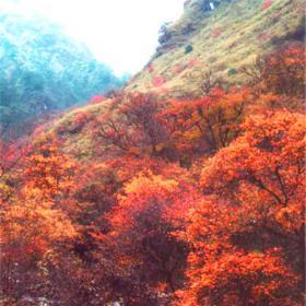 瓦屋山红叶
