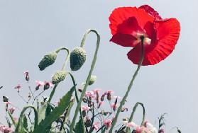 最美人间四月天 路边野花也能拍出大片!
