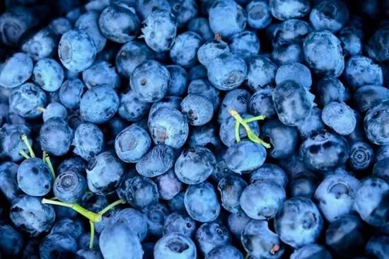 大量蓝莓即将上市,眉山周边这些地方采摘既好玩又便宜!