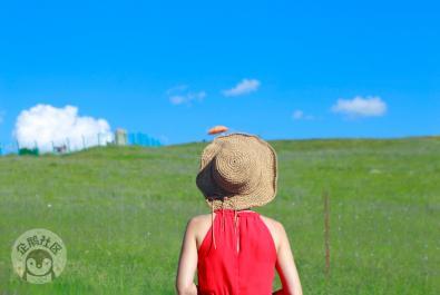 若尔盖夏季观花指南丨草原、花海、星空,和你。