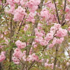 賞花、采摘、美食...還有獎品可領!眉山這個踏踏賞花攻略速速收藏!