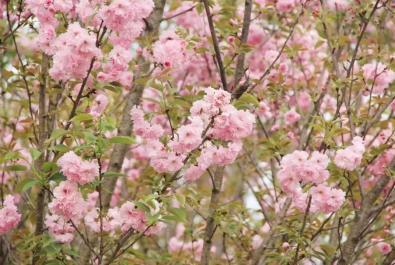 赏花、采摘、美食...还有奖品可领!眉山这个踏踏赏花攻略速速收藏!