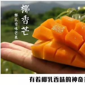 [章鱼挑食]来自攀枝花的这款芒果,有淡淡的椰香味~免费送!