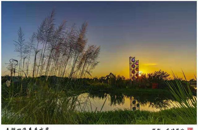 《五湖四海寿乡水岸》——东坡箜竹【摄影师每日一图赞眉山】