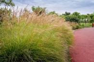 走进湿地二期,粉色调成为公园的主色调了,伴着微风,粉色调的花和浅色调的毛毛草等...