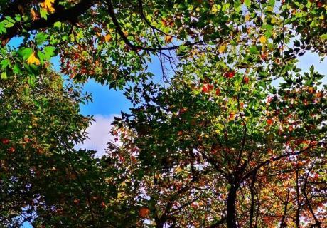 一叶而知深秋,玉屏山的秋天有点不一样!
