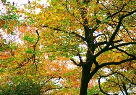 玉屏山 | 初秋景色绝美!